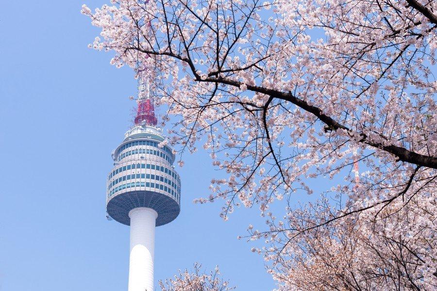 【首爾景點推薦】首爾賞櫻景點推薦,附2020韓國櫻花開花時間